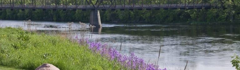 Chippewa River with flowers