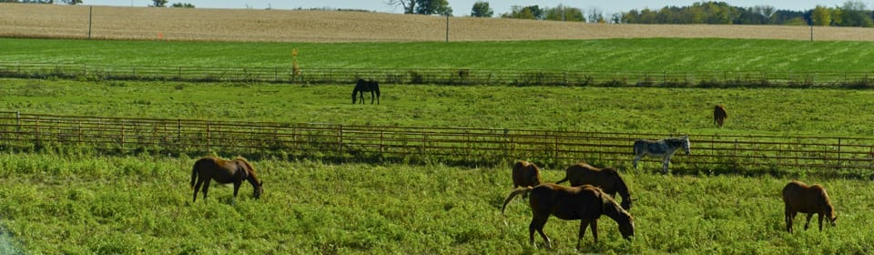 Wisconsin Countryside with horses